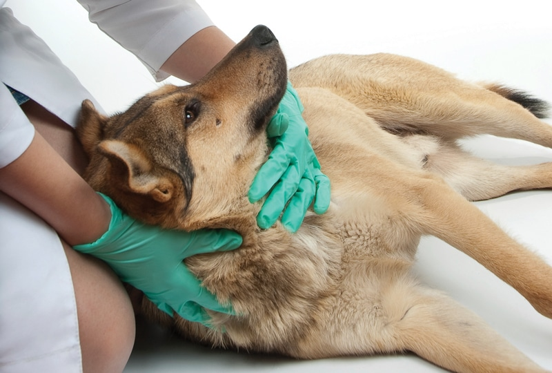 Importance of veterinary care Services