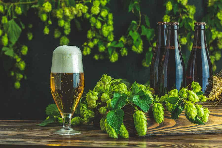 Hops Brings Beer To Life Growers Bring Life To the Hops
