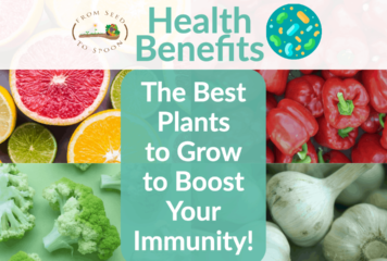 How Different Plant Foods Can Enhance Your Immunity